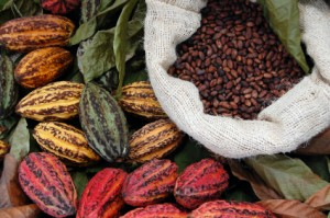 Cacao Fruit and Beans