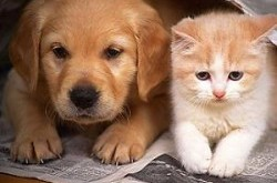 kitten-puppy-together