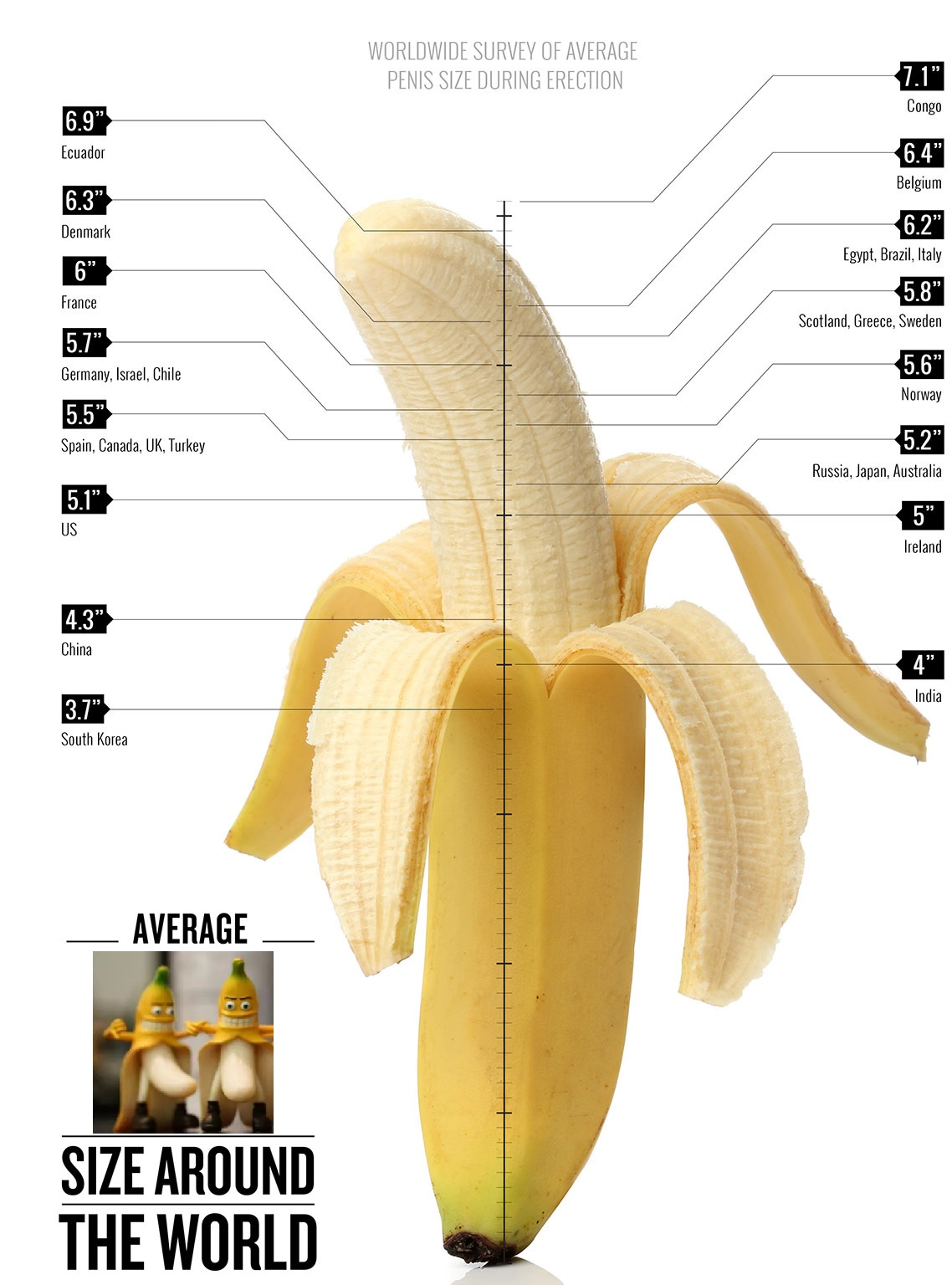 Penis size infographic